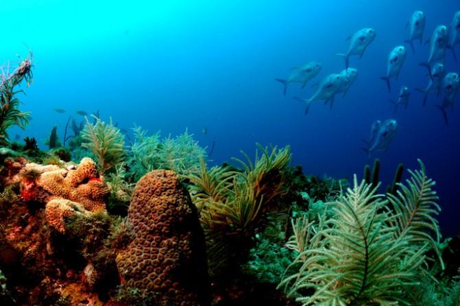 미국 플로리다키스제도의 산호초지대.  - 미국해양대기관리처 제공